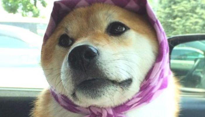 は ほっ かむり と 「いわしのほっかぶり寿司」駅弁情報|釧路駅の駅弁