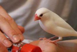 ふわふわで丸いフォルムにキュン! キュートな姿がかわいい文鳥 画像8選