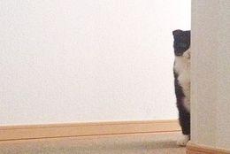 ふとした瞬間に感じる視線……飼い主さんに熱い視線をおくる犬ネコ 画像10選