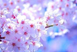 花より彼氏&彼女? お花見で恋人を作るためのアドバイス 5選