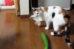 【動画】ネコの近くにキュウリを置くと……びよーんと飛ぶ姿が愛らしすぎる!