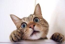 にゃーだけじゃない! 猫が出せる声10種とその意味とは?