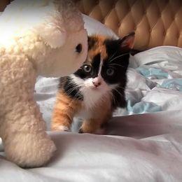 【動画】じりじり…じりじりと。ちょっとずる迫り来る小猫がかわいい!