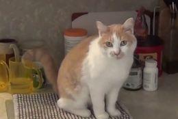 【動画】ぶらりーんと? 飼い主のお皿洗いを手伝う? 邪魔する? ねこちゃん