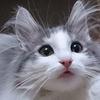たまらない! ネコの耳毛を集めた「耳毛祭り」写真10選