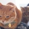 けだるい顔が癖になる? かわいくて個性豊かなネコちゃんたち 画像16選