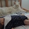 子守はおまかせ? 赤ちゃんを厳重に守るSP猫トロちゃんとツナちゃん 画像7選