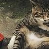あれ、いつの間に……? 「おっさん化」が止まらない猫さん7選