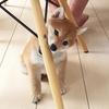 海外でも大人気! シバスタグラムでみつけたかわいい柴犬 画像6選