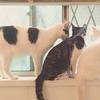 大変だけどこの上ない幸せ? たくさんのペット達に囲まれた『多頭飼い』の生活 画像10選