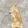 夏の季節限定? かわいすぎるネコの股開き 写真10選