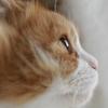 横顔美人は正面美人? 美しすぎるネコちゃんの横顔 画像11選