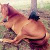 気分は乗馬? お馬さんに乗るかわいらしいネコさん 画像8選