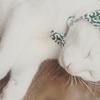 ずきんが似合いすぎ? 泥棒スタイルが愛らしい犬ネコさん 画像10枚