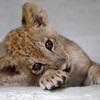 癒されること間違いなし! ニヤニヤが止まらない動物の赤ちゃんたち 10選