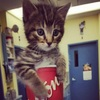 激カワ♪マグカップにすっぽり入っちゃう子猫たち 画像10選