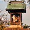 神社や寺……なぜか神聖なところでくつろぐネコ達 画像10選