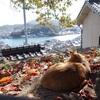 尾道の素敵な風景と共に...…ネコちゃん特集 画像10選