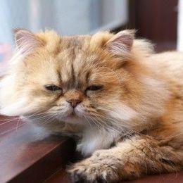 休み明けの憂鬱を吹き飛ばせ! 癒される動物のTwitterアカウント7選「ももとみらい:北海道の大自然に暮らす猫とリス」