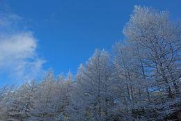 自然に囲まれ魅力がいっぱい!冬に行きたい長野の絶景スポット5選
