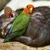 ネコとインコは仲良し? 大きさも力も違うのになぜか惹かれあう1匹と1羽 画像10選