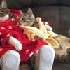 リラックス感満載! ソファに座ってテレビを見ているネコちゃん 画像10選