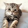うるうる……今にも泣いちゃう? 悲しそうなネコちゃん達 画像10選