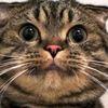 喜怒哀楽!見ていて飽きない、かわいいネコちゃん達 画像10選