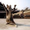 【爆笑】なんでそんな姿に……おもしろかわいすぎるネコちゃん達 画像10選