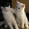 【爆笑】なにしても、なんでこんなにかわいいの? 魅力的なネコちゃん達 画像10選