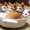 いたるところに! あっちにも、こっちにも埋もれるネコたち 画像10選