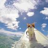 【動画あり】海は友達ニャー!サーフィン大好きな片目猫がかっこカワイイ! 写真9枚