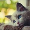「どうしたの~」と抱きしめたくなる!! 悲しそうな表情の犬ネコたち