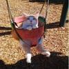 【爆笑】笑わずにはいられない? おもしろかわいいネコたち