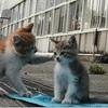 【傑作ボケ】笑いで疲れを吹っとばせ!センスあふれる猫のボケて!