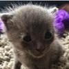 【大変身!】未熟児だった小さな子猫が驚きの「イケメン猫」に成長♪