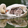 もふもふ、かわいい! 子どもとたわむれる鳥たち