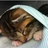 【キュン♡】可愛すぎる8枚♡獣医さんたちを癒す「●●に納まる子猫」とは?