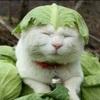 思わず吹き出してしまう!笑える猫の『傑作ボケ』集めました♪♪