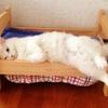 海外でも話題!! 『IKEAの人形用ベッド』をネコさんに使ってもらったら……