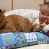 なにされても怒らない!赤ちゃんと遊んであげる大人なねこさん