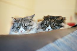 猫と暮らせる、英語が学べる……話題の新型シェアハウス6選