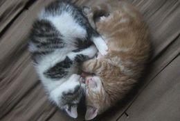 猫の愛は深い!暑苦しいくらい愛が濃い猫たち 13選