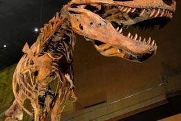 大学生は無料?!  地球と科学の歴史を知れる、国立科学博物館の魅力って?【学生記者】