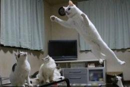 ぴょーんと! 高すぎる身体能力が魅力的なネコたち 画像10選