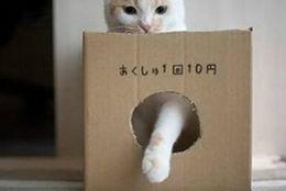 【爆笑】思わず笑ってしまう! ボケてで人気のネコちゃん達 画像10選