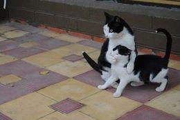 【爆笑】見ているだけでクスっと笑っちゃう? おもしろかわいいネコちゃん 画像10選