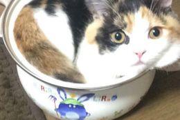 鍋の中にぎゅうぎゅう! いろんなものの中で埋まってしまうネコたち 画像10選