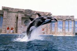 【学割:水族館・動物園】大学生の水族館デートを楽しくするために気をつけるべきこと3つ