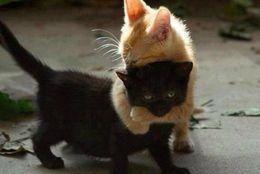 胸きゅん必須! 見ているだけで癒されるかわいい子猫たち 画像10選
